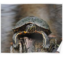 Turtle Grip Poster