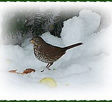 Bird Eating In The Snow by Jonice