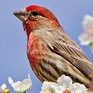 Bird & Blossoms by lorilee