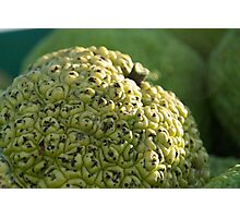 Hedge Apple: An Osage Orange Photographic Print