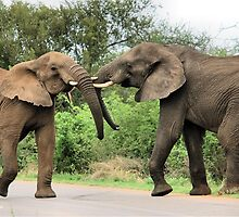 INTERACTION - THE AFRICAN ELEPHANT – Loxodonta Africana - Afrika Olifant by Magriet Meintjes