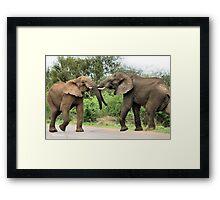INTERACTION - THE AFRICAN ELEPHANT – Loxodonta Africana - Afrika Olifant Framed Print