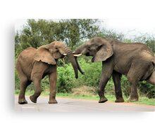INTERACTION - THE AFRICAN ELEPHANT – Loxodonta Africana - Afrika Olifant Canvas Print