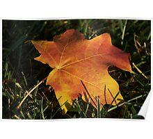 Gold Leaf Subsiding Poster
