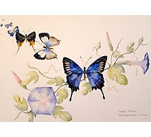'Butterflies & Vine' Photographic Print
