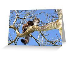 Maine Coon Cat in Tree Greeting Card