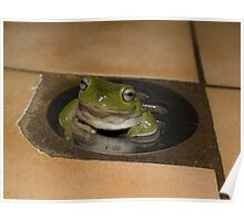 Frog in a Hole - Cairns - Queensland - Australia Poster
