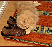 """"""" I'm guarding my Dad's Shoes"""" by mrcoradour"""