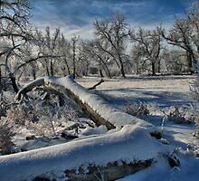 Frost Laden by Paul  Threlkel