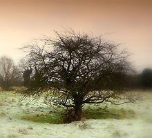 Frosty Morning... by Kate Towers IPA