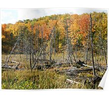 Autumn in Gatineau Park ,  No. 3 Poster