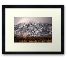 Just Above The Tree Tops Framed Print
