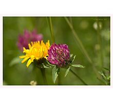 Flowers in spring-  Fleurs au printemps Photographic Print