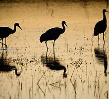 Crane Trio by rjcolby