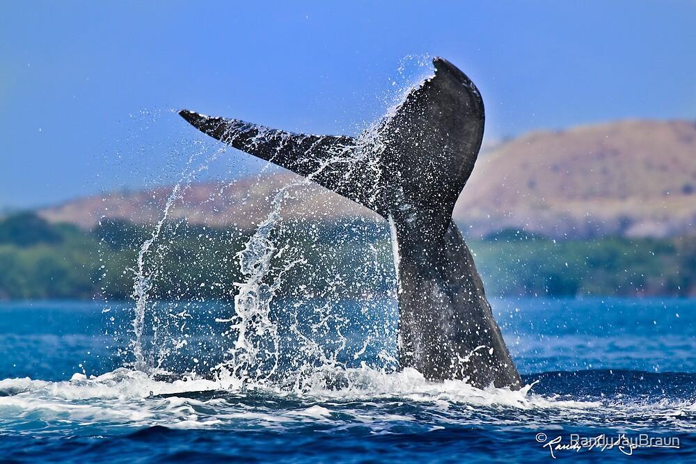 Whale Series #707 by Randy Jay Braun