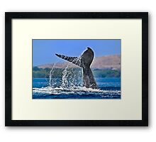 Whale Series #707 Framed Print
