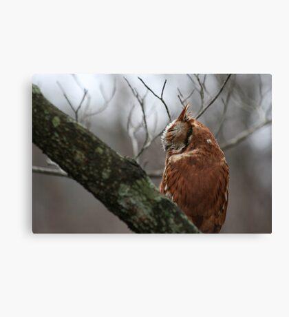 EASTERN SCREECH OWL - SIDE VIEW Canvas Print