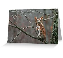 EASTERN SCREECH OWL - FRONT VIEW Greeting Card