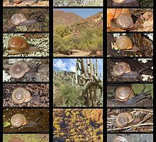 Sonoran Desert Land Snails of Phoenix, Arizona by Nick Waters