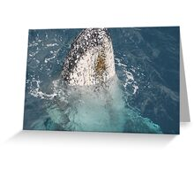 whales of hervey bay Greeting Card