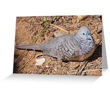 Peaceful Dove, Northern Territory, Australia Greeting Card