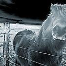 the blue horse by NordicBlackbird