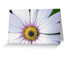 Blooming Cape. Greeting Card
