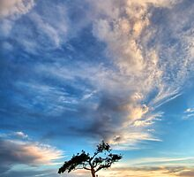 A tree, a rock and a sunset by Heather Prince