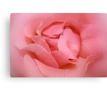 In the pink.  Canvas Print