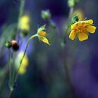Princess Buttercup by Nikki Trexel