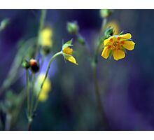 Princess Buttercup Photographic Print
