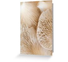 White Sea Coral Greeting Card