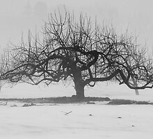 Lonely Apple Tree by Kelly Connolly