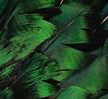 Green Feathers by minimalistme
