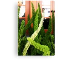 Asparagus ferns Canvas Print
