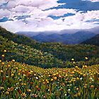 'Wonder of Wildflowers, Mt Buller' by Helen Miles