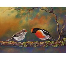 'Red Capped Robins' Photographic Print