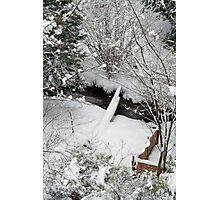 My SnowWhite Greenbelt ! Photographic Print