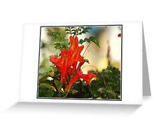 Firecracker Shadows Greeting Card