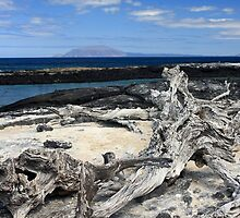 Driftwood by Sue  Cullumber