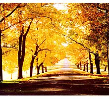 """""""Seasons In The Fall"""" Photographic Print"""