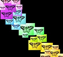 Butterfly Rainbow by cathyjacobs