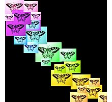 Butterfly Rainbow Photographic Print
