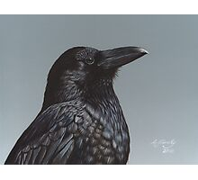 Study of a Raven Photographic Print