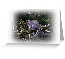 Squirrel Country Greeting Card
