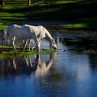 Reflections of silver by Penny Kittel
