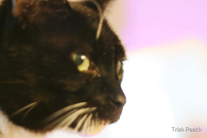 Cat looks here... by Trish Peach