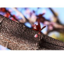 Spring bud Photographic Print