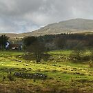 A Lakeland Farm by Jamie  Green