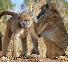 Yes, that's where it is!  Baboons,  Chobe National Park, Botswana by Adrian Paul
